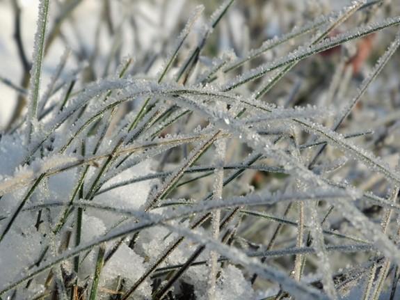 winterzauber gartenpflanzen im winter kleid gartenplanung online online gartenwelt. Black Bedroom Furniture Sets. Home Design Ideas