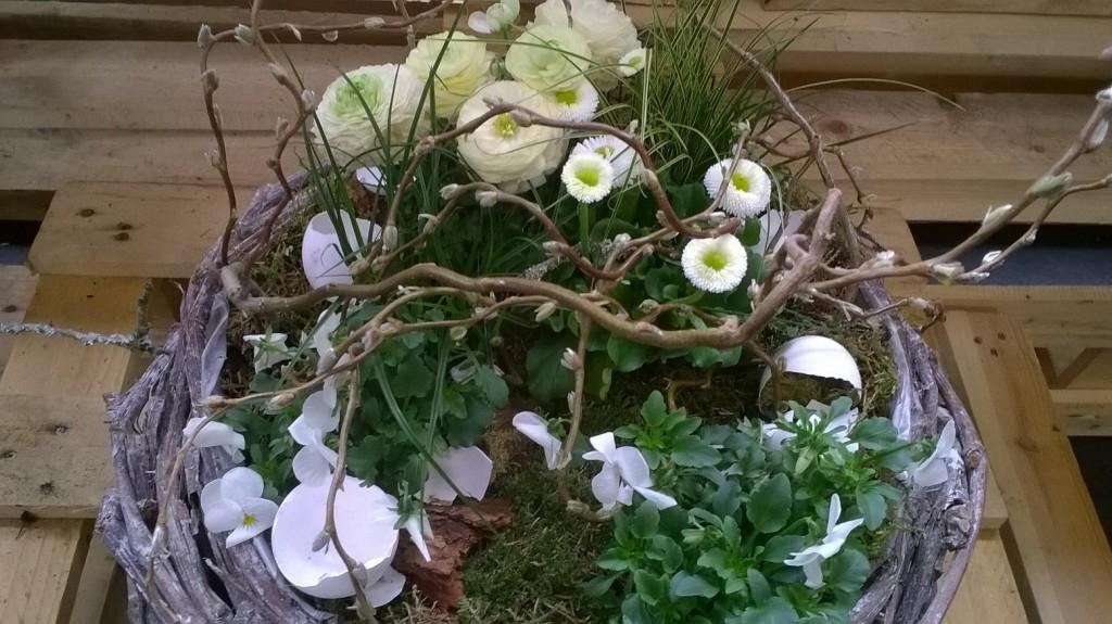 Tag der zimmerpflanze gartenplanung online online - Zimmerpflanze rankend ...