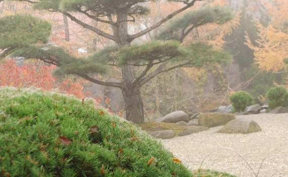 Japanischer Garten Archive Gartenplanung Online Online Gartenwelt
